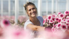 gerbera, greenhouse, hydroponic, growing,